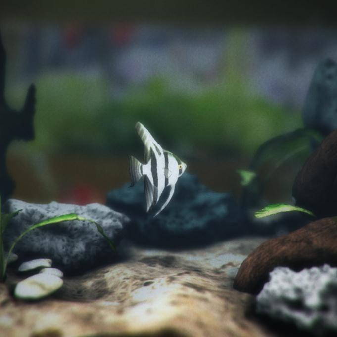 The Interactive Angelfish